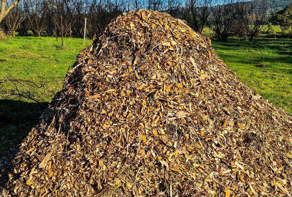 A pile of woodchips on green grass