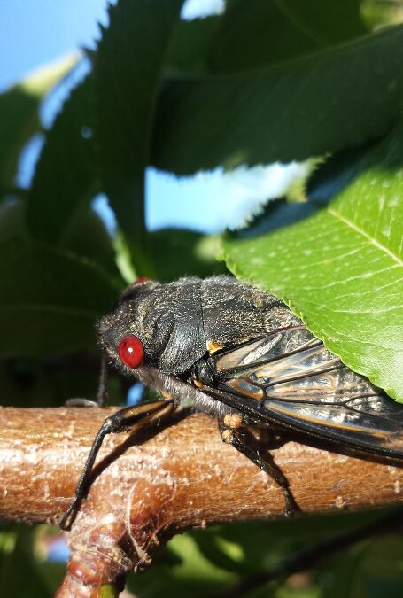 How to overcome your fear and suspicion of insects in fruit trees