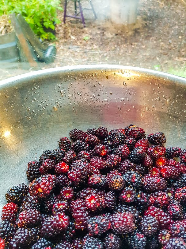 Freshly picked berries waiting to be turned into a delicious dessert