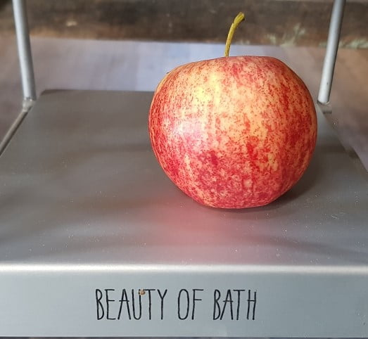 The little-known variety Beauty of Bath