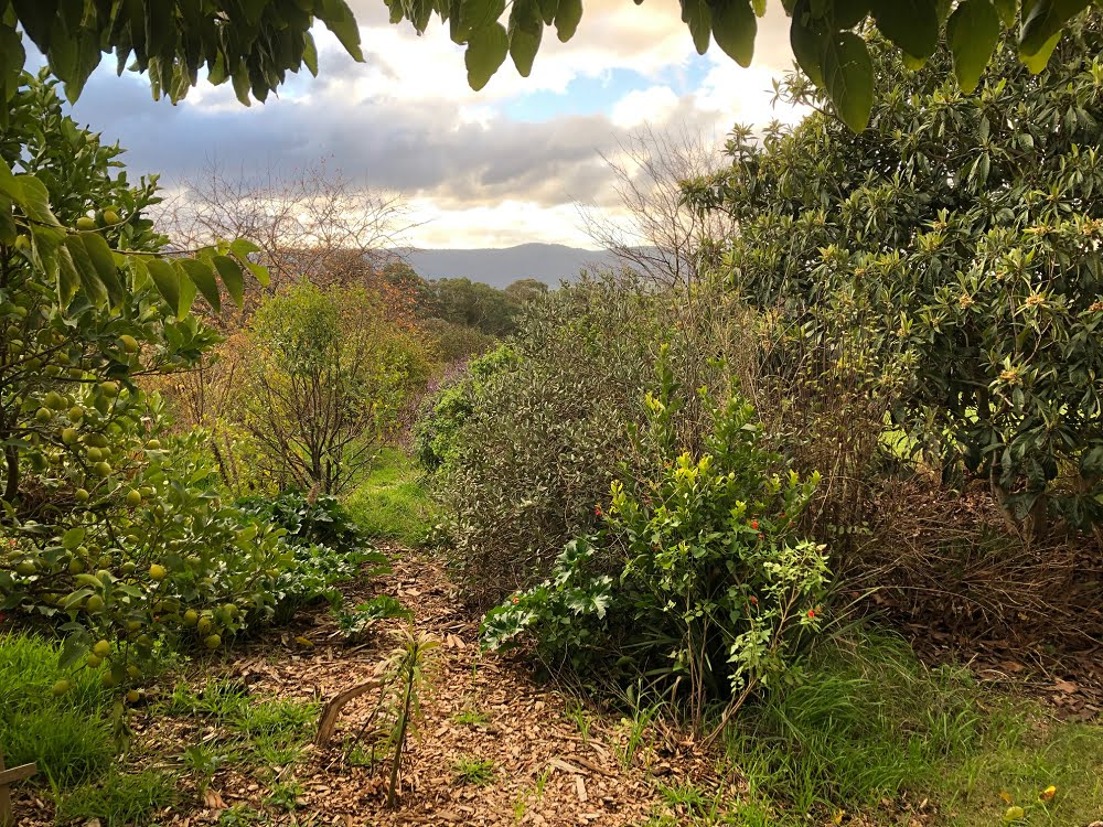 A beautiful and biodiverse garden with lots of fruit trees mixed up together