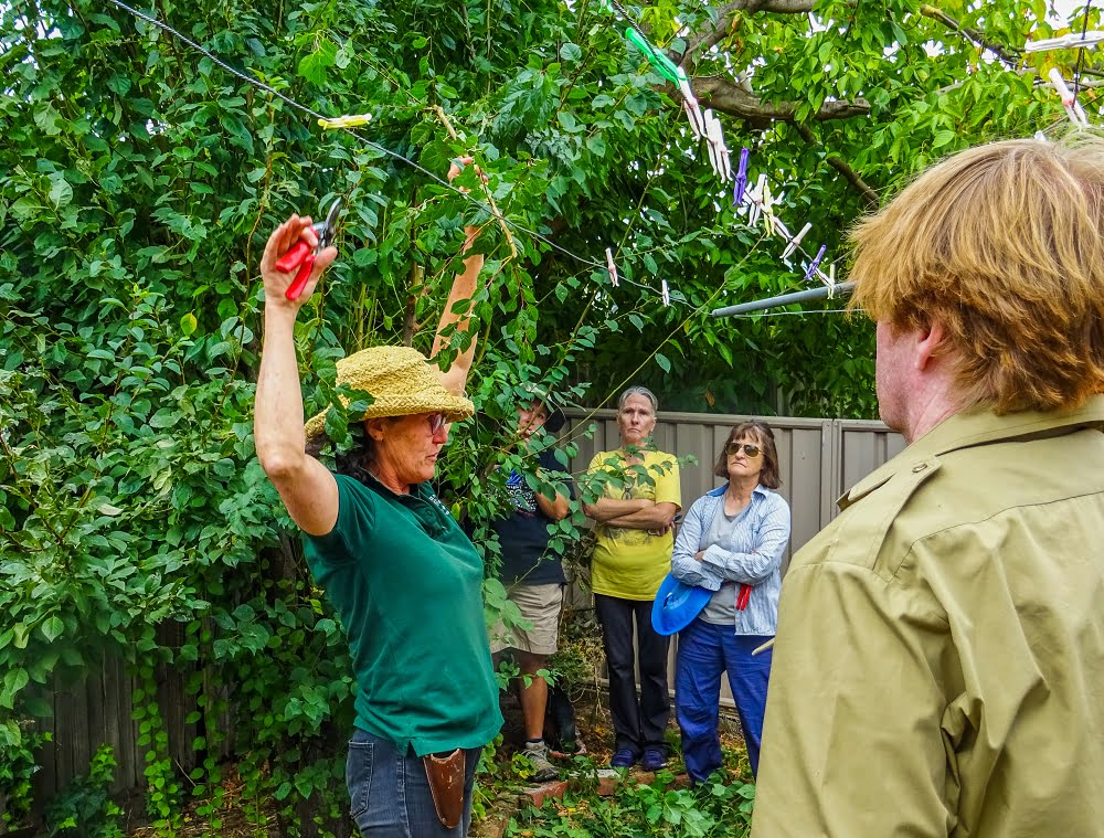 Katie pretending to be a tree at a summer pruning workshop