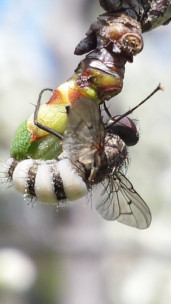Bugs on your fruit trees are not necessarily a cause for concern