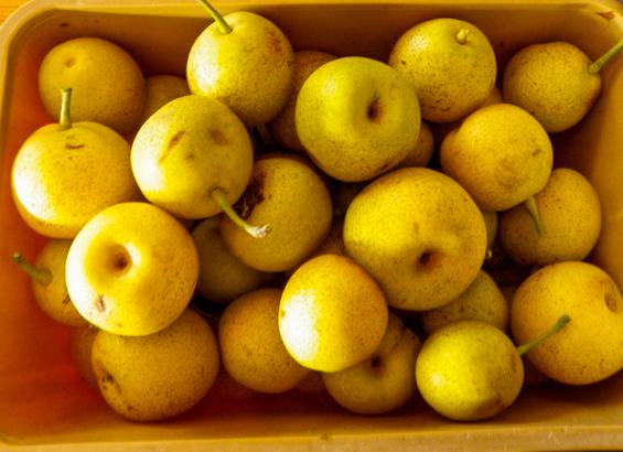 Beautiful Nijinkski nashi pears