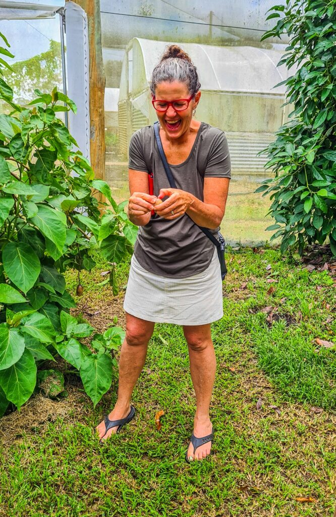 Katie trying a grafted tamarillo