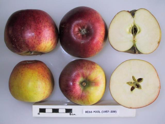 Bess Pool apples from the National Fruit Collection at Brogdale, UK (via Wikimedia Commons)