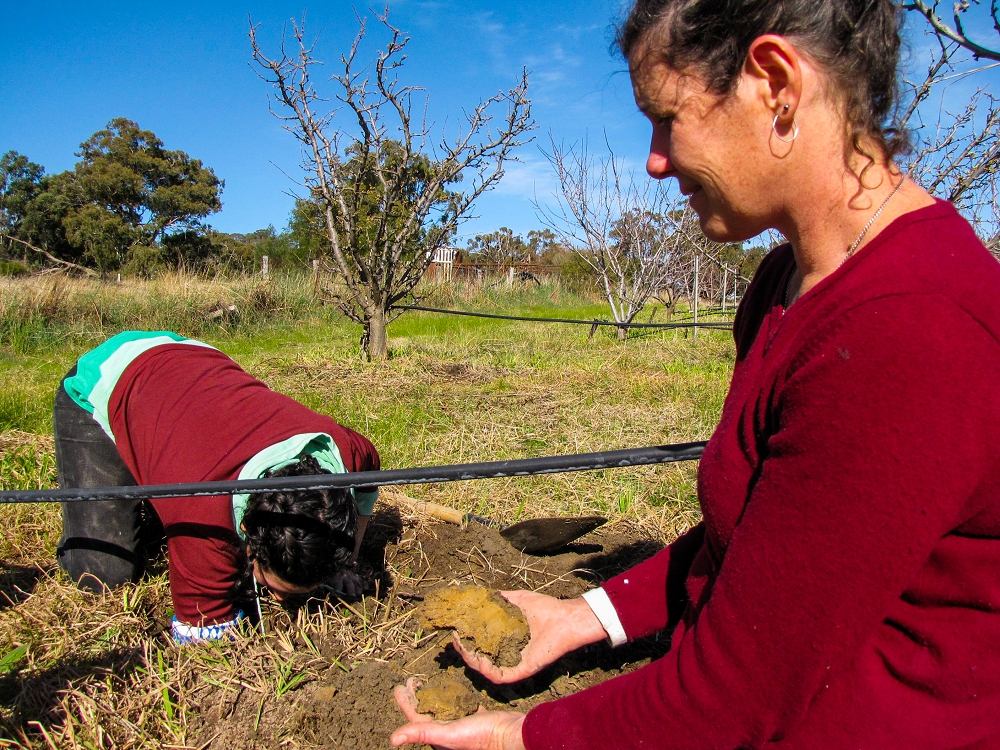 Digging a hole and examining your soil helps you understand it