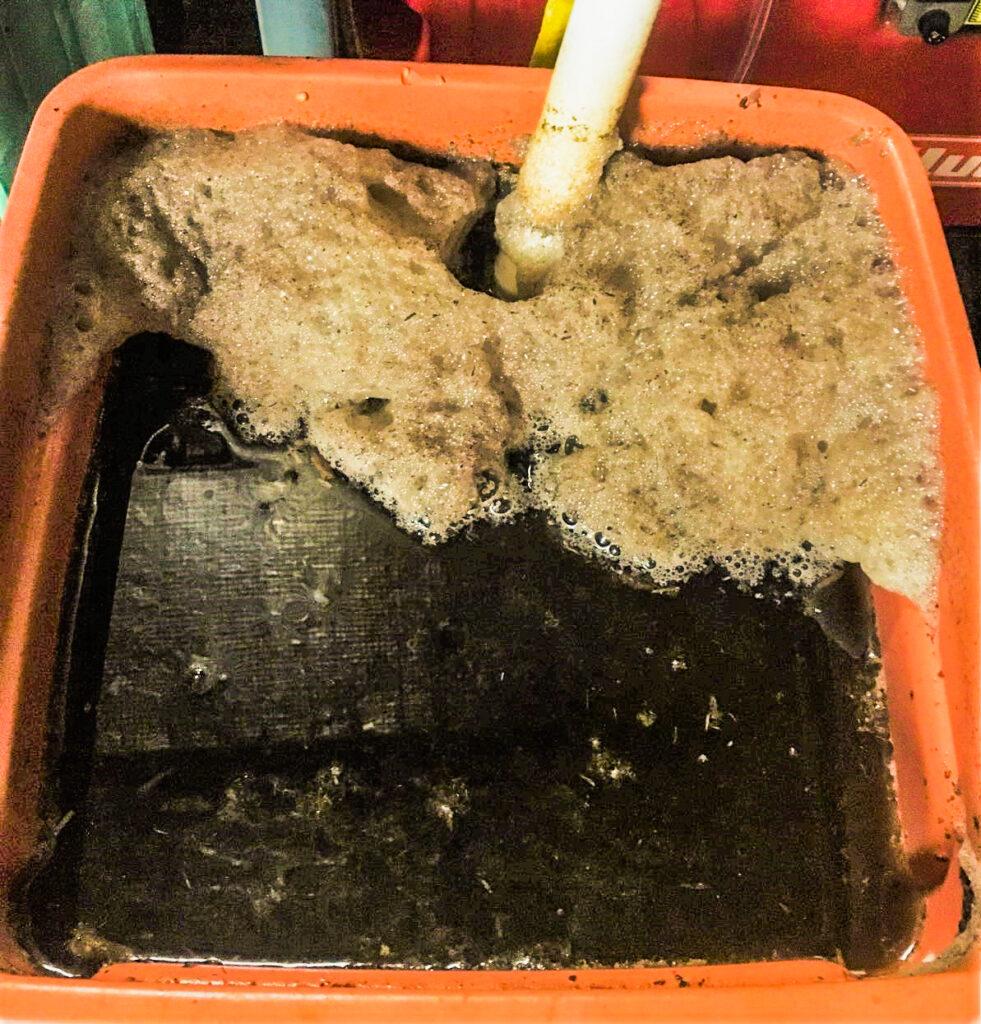 A compost tea brew bubbling away