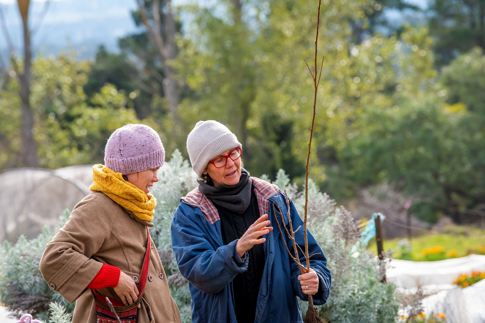 Katie explaining how to prune a young tree (Photo: Brendan McCarthy)
