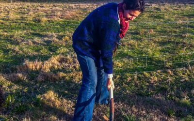 How to plant a fruit tree – the easy way